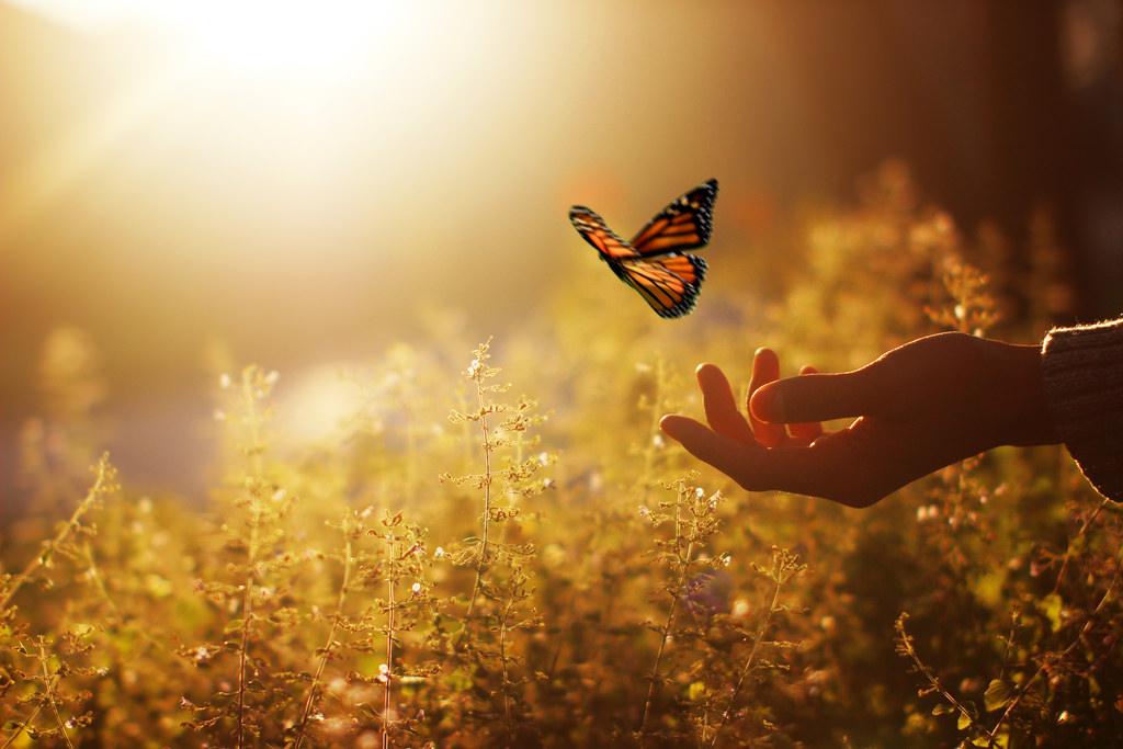 Vlinder Hand Klein